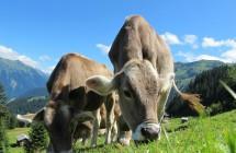 Мярка 4.1. Инвестиции в земеделски стопанства